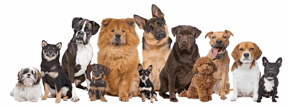 Conjunto perros disintas razas