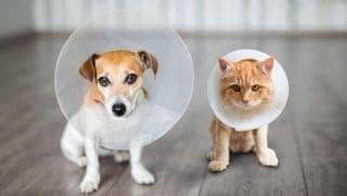 Esterilizacion mascotas