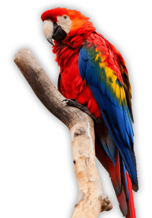 Animales exoticos aves
