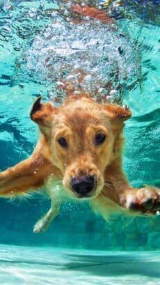 Rehabilitacion fisioterapa mascotas