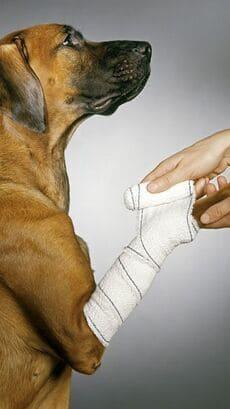 Traumatologia veterinaria