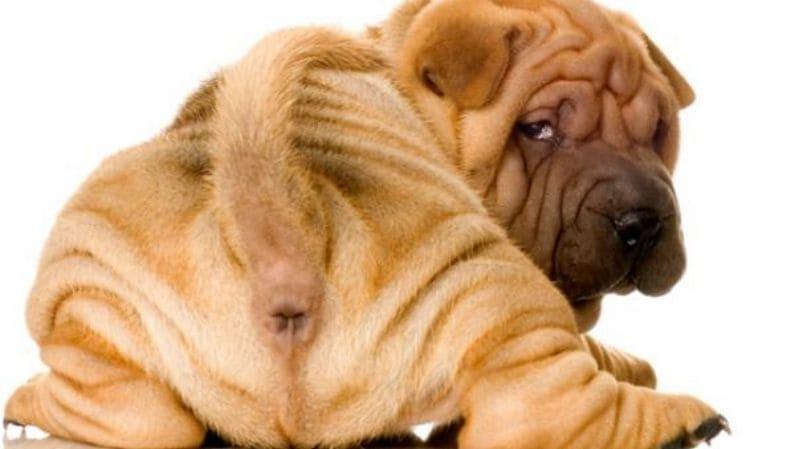 Infecciones gastrointestinales en cachorros