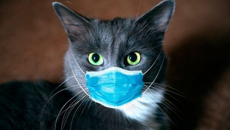 Gato-mascarilla