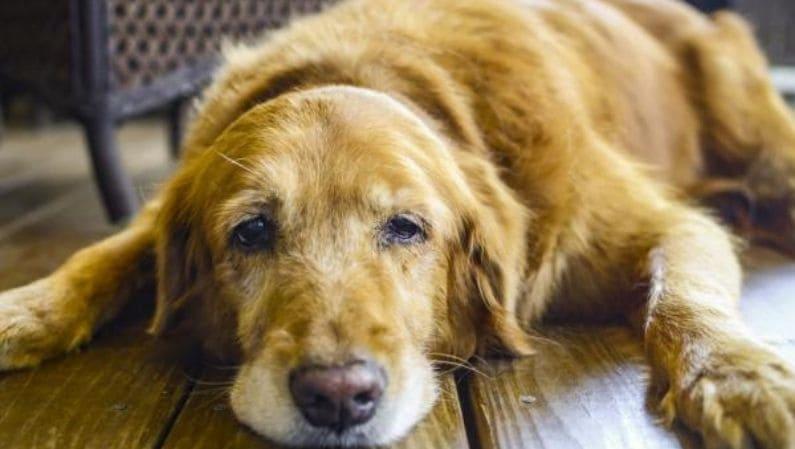Golpe de calor en mascotas: ¿cómo evitarlo?