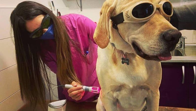Laser perro