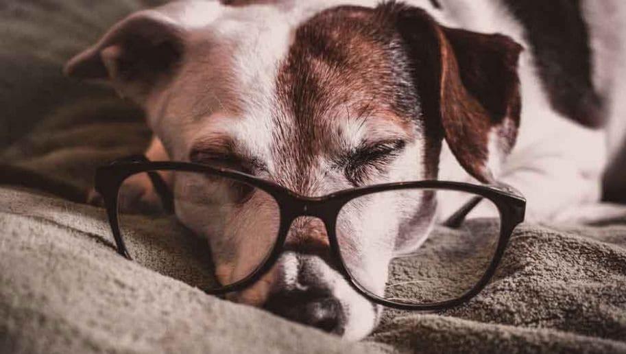 Animales geriátricos ¿qué son?
